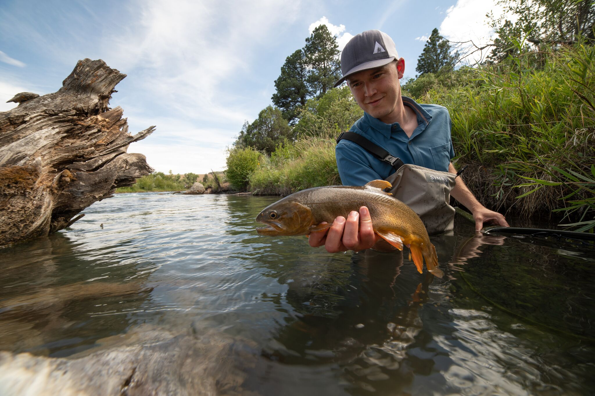 Fly Fishing for river trout in Colorado